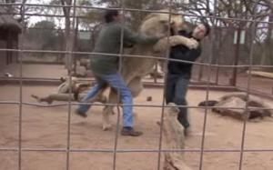Lion tamer... That seems like it'd be a fun job.