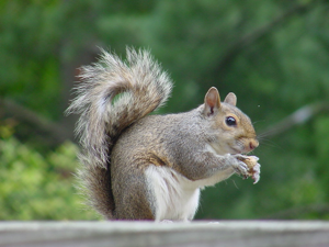 Hahahaha! You'd be all like, nom nom nom, this walnut is fucking delicious, but I really want to find some pot plants to chew on. Hahahaha! Hey, do we have any walnuts?