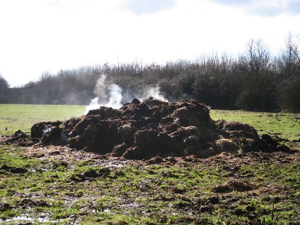 I couldn't find a picture of the Crappy Castle, so here's a picture of a steaming pile of shit, which is more useful than the castle since you can use it as fertilizer or to dump it on the house of the kind of person that gives your kids a Crappy Castle.