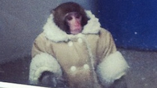 Raoul, my IT monkey