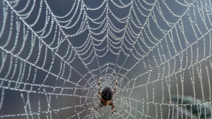 A spiderweb, or possibly a being from the 23rd dimension