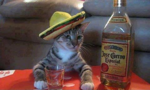 Another helpful hint: Don't name your cat Cuervo.